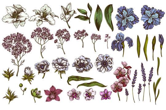 Vector set of hand drawn colored anemone, lavender, rosemary everlasting, phalaenopsis, lily, iris
