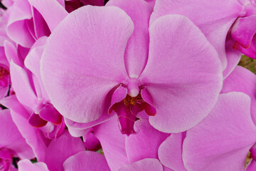 Close up of orchid flower blossom growing on plant stem