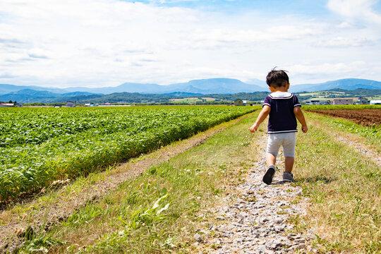 畑で遊ぶ幼児