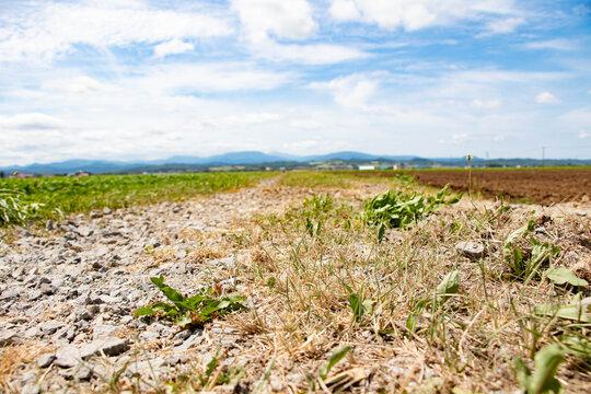 耕された畑