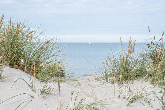 dunes with swaying beach rye and a sailboat at the horizon