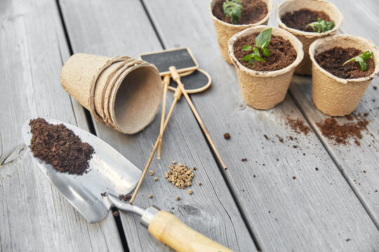 gardening, eco and organic concept - vegetable seedlings in pots with soil and name tags with garden trowel on wooden board background