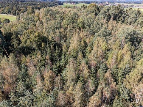 Aussicht auf einen schönen Wald