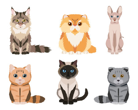 Set of different cat breeds: maine coon, persian, siamese, british cat, scottish fold, sphynx. Cute illustrations isolated on white background. Vector collection for your design