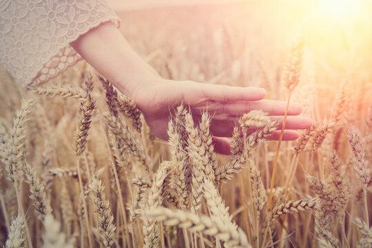 Female hand over wheat field