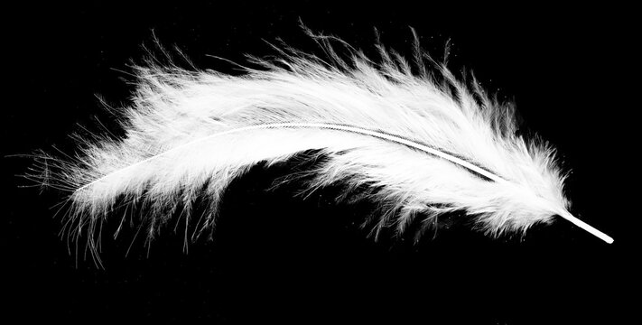 Real photo of feathers, white feathers in black background