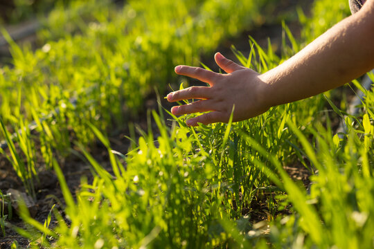 Children hand touching plants on a field. Care about plants.