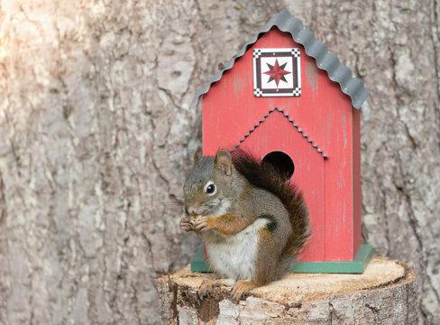 Original wildlife photograph of a small squirrel sitting next to a red barn quilt birdhouse by a tree