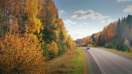 Wall Mural - Cars travelling on remote highway road in beautiful yellow autumn forest, camera ascending from ground level revealing aerial panorama landscape. 4K UHD.