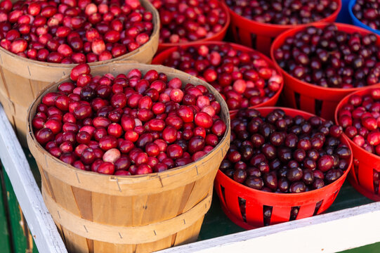 Cranberries in baskets at the market