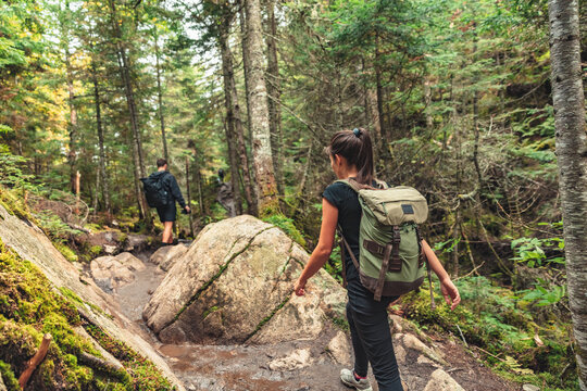 Hikers walking on forest trail with camping backpacks. Hiker woman from behind hiking in autumn fall nature woods. Group of tourists wearing backpacks outdoors trekking on mountain.