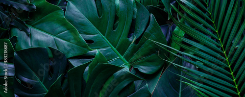 Wall mural closeup tropical green monstera leaf background. Flat lay, fresh wallpaper banner concept
