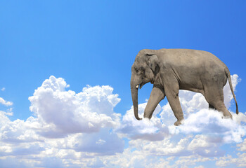 Horizontal banner with elephant above clouds