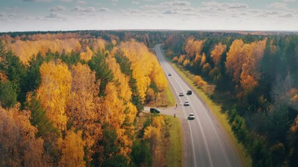 Wall Mural - Cars travelling on remote highway road in beautiful yellow autumn forest landscape, aerial view, camera descending to ground level. 4K UHD.