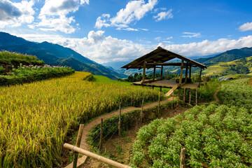 Farmhouse with terraced rice fields in Mu Cang Chai district, Yen Bai province, Vietnam.