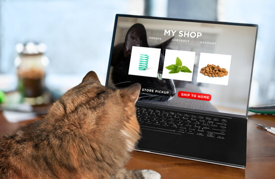 Cat ordering food, toy and catnip by internet with a laptop for home delivery. Concept for pets using technology, ordering online or animals imitating humans. Selective focus with blurred background.