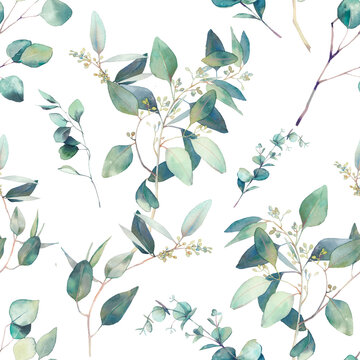 Watercolor eucalyptus seamless pattern. Hand painted floral texture with plant objects on white background. Natural wallpaper