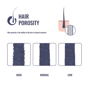 Hair porosity types classification set. Realistic hair strand with low, normal and high cuticle porosity. Anatomical structure scheme vector illustration.