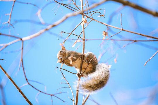 Squirrel on tree at Princeton University