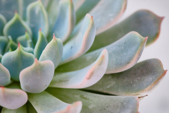 garden, succulent, echeveria, green, flora, cactus, plant, home, decor, gardening, closeup, decorative, nature, natural, floral, flower, succulents, botany, botanical, tropical, wooden, leaf, grow