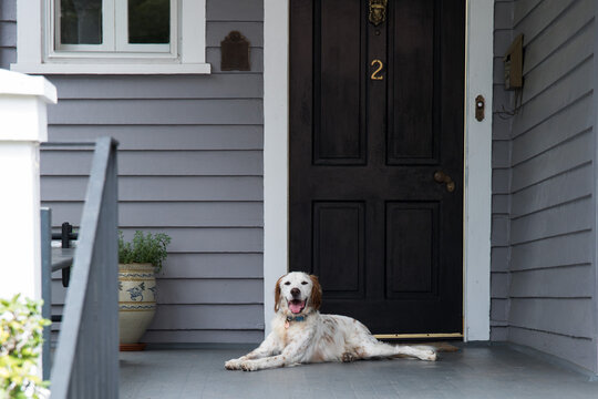 Traditional homes in Southern America streetscape dog resting on front porch