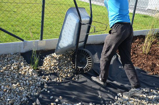 delivery of gray river pebbles like mulch to flower beds in the garden using a wheelbarow from the body of a truck or trailer. shovel and rake the layer over the black nonwoven fabric.