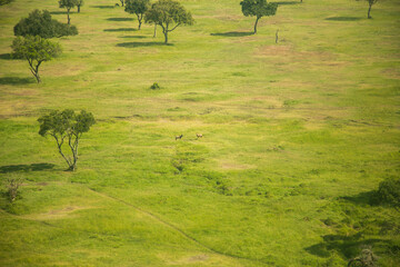 A aerial shot of the Kenya savannah, 122 miles east of Nairobi, Kenya, africa, near Mara Rianta Wall mural