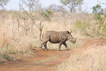 Walking rhino