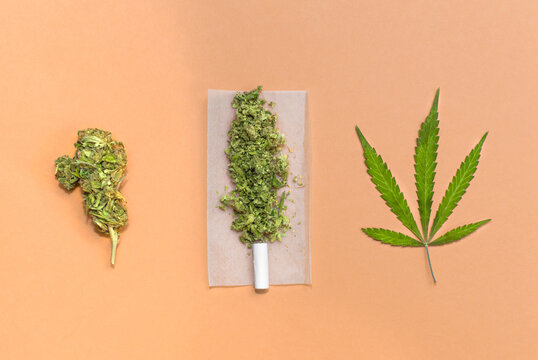 Rolling a cannabis joint: marijuana bud, leaf and joint ready to roll.