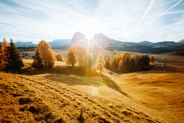 Wall Mural - Yellow larches in the sunlight. Location Dolomite alps, Alpe di Siusi, Italy, Europe.