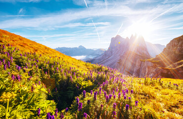 Wall Mural - Morning view of the alpine valley in sunlight. Location place Puez-Geisler National Park, Seceda peak, Italy.