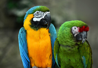 Green and orange parrots resting on a sunny day