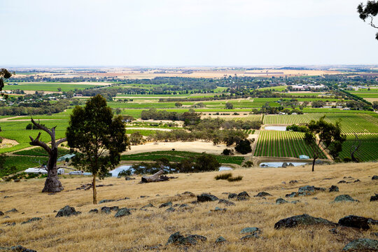 hilltop view over vineyards and farmland