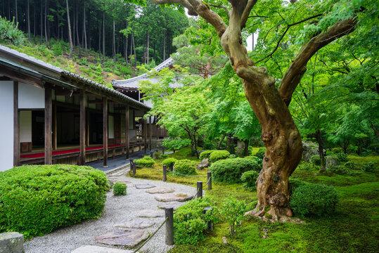 京都 圓光寺の新緑
