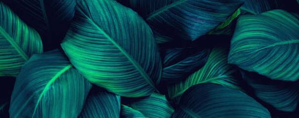 Wall Mural - abstract green leaf background. Flat lay, fresh wallpaper banner concept