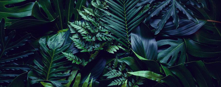 closeup tropical green leaf background. Flat lay, fresh wallpaper banner concept