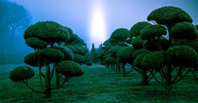 Lights over Bonsai