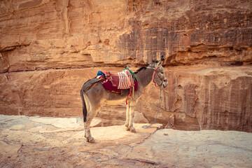 A donkey in Peta