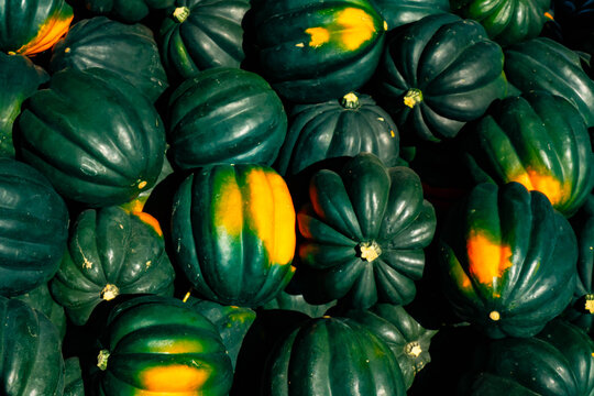 Bunch of acorn squash fresh picked and for sale at a farmer's market near Battle Creek, Michigan, USA in late September.