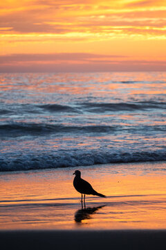 Seagull on the sunset beach