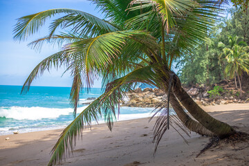 Natural background of seaside scenery (with coconut trees, boulders, sandy beach) and blurred sea waves.