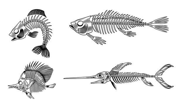 Black bass fish skeleton flat set for web design. Vintage monochrome marine animal bones isolated vector illustration collection. Design elements for sea creatures concept