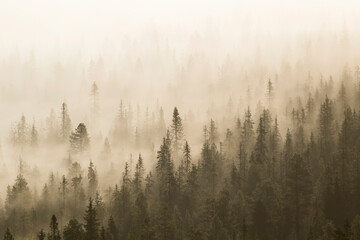 Fog in the forest in the morning. Foggy landscape photographed from Rukatunturi fjell near Kuusamo, Finland, Northern Europe