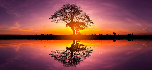 Panorama silhouette tree in africa with sunset.Tree silhouetted against a setting sun reflection on...