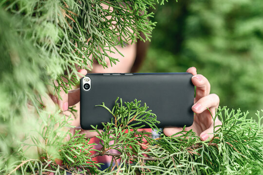 A paparazzi girl hand with a black mobile phone camera taking picture hiding through green fir tree branches in the forest. Concept