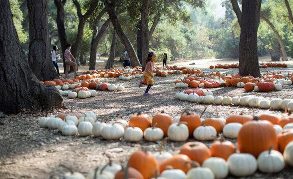 "A girl runs through a pumpkin patch installation during the ""Halloween at Descanso"" event at Descanso Gardens in La Canada Flintridge"