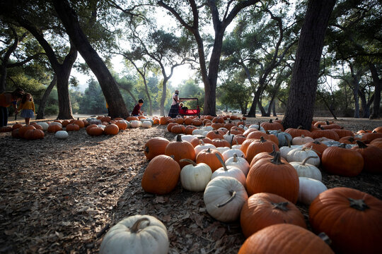 """Visitors walk through a pumpkin patch installation during the """"Halloween at Descanso"""" event at Descanso Gardens in La Canada Flintridge"""