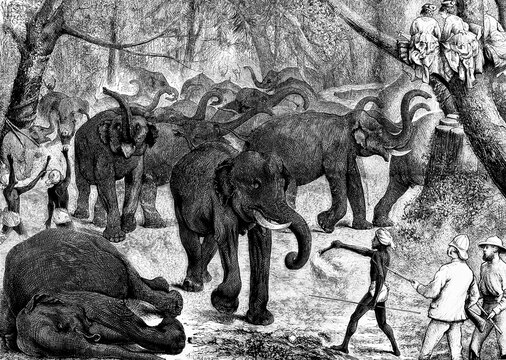 Mysore, India. Hunting elephants to domesticate them and dedicate them to agriculture work. Antique illustration. 1875..