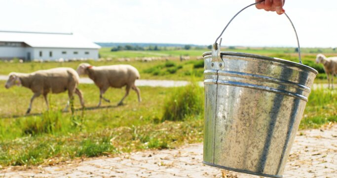 Close up of bucket in hand of female shepherd. Outdoors. Woman walking in field to feed cattle. Farmer strolling at pasture and feeding sheep flock. Animals grazing. Giving water to drink to livestock