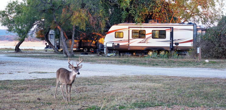Camping in Texas with Wildlife.